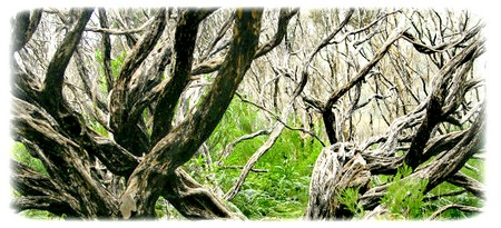 obsah-18-teebaum-nature-map.jpg